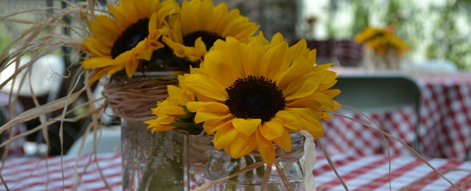Bouquets of sunflowers in mason jars tied with raffia ribbon sitting on a table with red and white checkered tablecloths for a BBQ style rehearsal dinner.